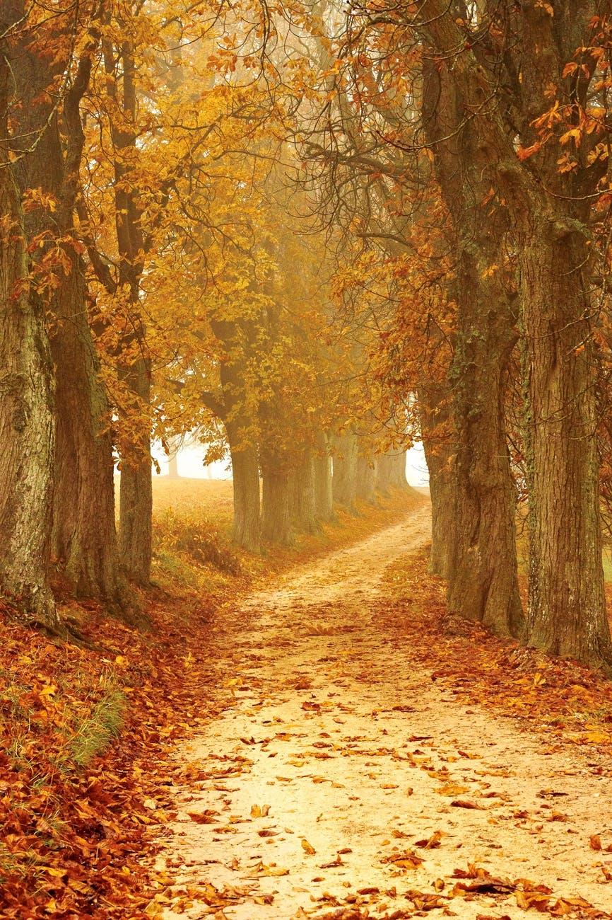 arbres aube bois branches d arbre